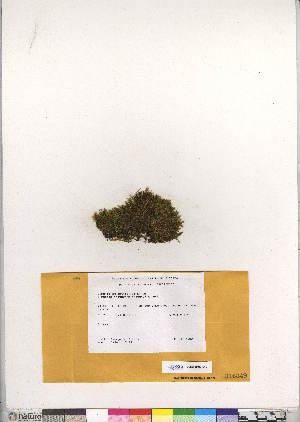 (Cinclidium latifolium - CCDB-28047-C12)  @11 [ ] CreativeCommons - Attribution Non-Commercial No Derivatives (2016) Canadian Museum of Nature Canadian Museum of Nature