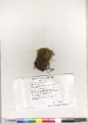 (Cinclidium latifolium - CCDB-28047-D12)  @11 [ ] CreativeCommons - Attribution Non-Commercial No Derivatives (2016) Canadian Museum of Nature Canadian Museum of Nature