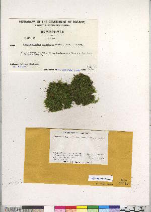 (Brachythecium serrulatum - CCDB-28095-D07)  @11 [ ] CreativeCommons - Attribution Non-Commercial No Derivatives (2016) Canadian Museum of Nature Canadian Museum of Nature