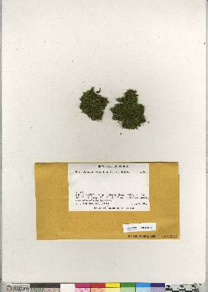(Brachythecium velutinum - CCDB-28095-F07)  @11 [ ] CreativeCommons - Attribution Non-Commercial No Derivatives (2016) Canadian Museum of Nature Canadian Museum of Nature