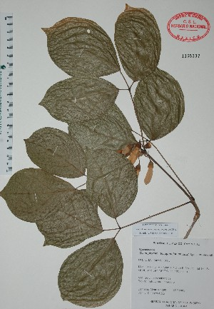 (Ceratophytum - Alvarez1290)  @11 [ ] Unspecified (default): All Rights Reserved  Unspecified Unspecified