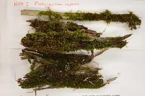 (Pylaisiadelphaceae - Robillard_EMPM21_CAN)  @12 [ ] Copyright (2012) Canadian Museum of Nature Canadian Museum of Nature