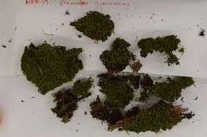 (Geocalyx - Robillard_EMPM38_CAN)  @11 [ ] Copyright (2012) Canadian Museum of Nature Canadian Museum of Nature