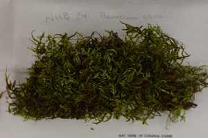 (Hylocomiaceae - Robillard_EMPM43_CAN)  @13 [ ] Copyright (2012) Canadian Museum of Nature Canadian Museum of Nature