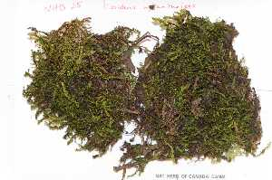 (Fissidentaceae - Robillard_EMPM44_CAN)  @13 [ ] Copyright (2012) Canadian Museum of Nature Canadian Museum of Nature