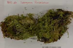(Sphagnum - Robillard_EMPM45_CAN)  @11 [ ] Copyright (2012) Canadian Museum of Nature Canadian Museum of Nature