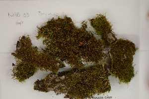 (Orthotrichum - Robillard_EMPM54_CAN)  @12 [ ] Copyright (2012) Canadian Museum of Nature Canadian Museum of Nature