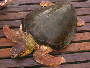 (Caretta - CC1)  @11 [ ] Unspecified (default): All Rights Reserved  Unspecified Unspecified