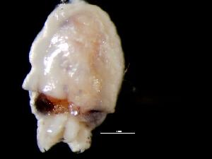 ( - Octopus vulgaris 3_S3MON)  @13 [ ] CreativeCommons - Attribution Non-Commercial Share-Alike (2011) Alvaro Roura Instituto de Investigaciones Marinas