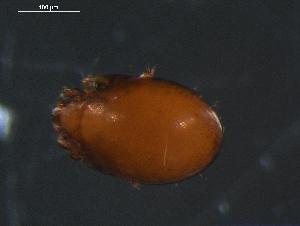 (Mycobatidae - DPMIT-34-61)  @14 [ ] CreativeCommons - Attribution Non-Commercial Share-Alike (2010) BIO Photography Group Biodiversity Institute of Ontario