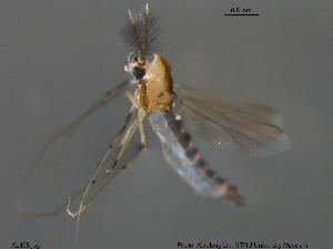 (Xiaomyia - XL465)  @11 [ ] CreativeCommons-Attribution Non-Commercial Share-Alike (2016) NTNU University Museum, Department of Natural History NTNU University Museum, Department of Natural History