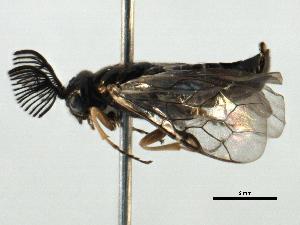 (Monocteninae - BIOUG04312-G10)  @14 [ ] CreativeCommons - Attribution Non-Commercial Share-Alike (2014) BIO Photography Group Biodiversity Institute of Ontario