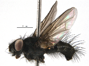 (Eulasiona - BIOUG09940-C06)  @14 [ ] CreativeCommons - Attribution Non-Commercial Share-Alike (2014) BIO Photography Group Biodiversity Institute of Ontario