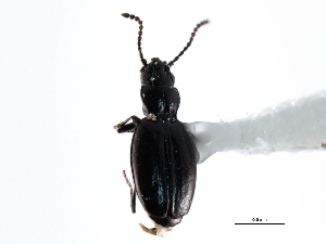 (Gehringiinae - CNC COLEO 00117574)  @13 [ ] CreativeCommons - Attribution Non-Commercial Share-Alike (2011) CNC/BIO Photography Group Biodiversity Institute of Ontario