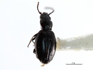(Gehringiinae - CNC COLEO 00117575)  @13 [ ] CreativeCommons - Attribution Non-Commercial Share-Alike (2011) CNC/BIO Photography Group Centre for Biodiversity Genomics