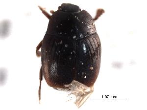 (Gnathoneus - CNC COLEO 00152368)  @11 [ ] CreativeCommons - Attribution Non-Commercial Share-Alike (2012) CNC/BIO Photography Group Biodiversity Institute of Ontario