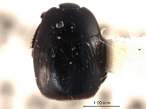 (Gnathoneus - CNC COLEO 00152371)  @11 [ ] CreativeCommons - Attribution Non-Commercial Share-Alike (2012) CNC/BIO Photography Group Biodiversity Institute of Ontario