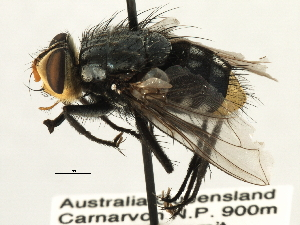 (Zita - CNC DIPTERA 197411)  @13 [ ] CreativeCommons - Attribution Non-Commercial Share-Alike (2013) BIO Photography Group/CNC Biodiversity Institute of Ontario
