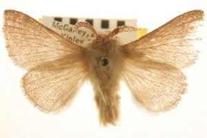 (Malacosoma tigris - BIOUG10886-C06)  @11 [ ] CreativeCommons - Attribution Non-Commercial Share-Alike (2014) BIO Photography Group Biodiversity Institute of Ontario