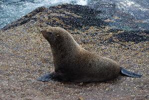 ( - CNP-MM-35)  @11 [ ] Copyright (2012) Enrique A Crespo Marine Mammal Lab- CENPAT-CONICET
