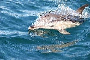 ( - CNP-MM-09)  @11 [ ] Copyright (2012) Enrique A Crespo Marine Mammal Lab- CENPAT-CONICET