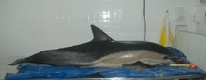 ( - CNP-MM-10)  @11 [ ] Copyright (2012) Enrique A Crespo Marine Mammal Lab- CENPAT-CONICET