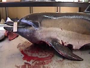 ( - CNP-MM-85)  @11 [ ] Copyright (2012) Enrique A Crespo Marine Mammal Lab- CENPAT-CONICET