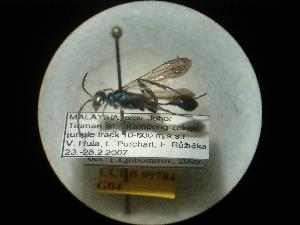 (Chalybion bengalense - CCDB-09784-G04)  @11 [ ] Copyright  G. Blagoev 2010 Unspecified