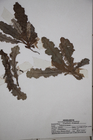 ( - DGC002B)  @11 [ ] by-nc-sa (2014) Aisha Tahir Biodiversity Institute of Ontario