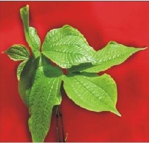 (Dioscorea hispida - AU-DIO-11)  @11 [ ] Copyright (c) (2013) Neha Nimbhorkar Sant Gadge Baba Amaravati university