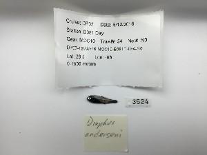 (Diaphus anderseni - DPND 3524)  @11 [ ] Copyright (2015) Ron Eytan Texas A&M University at Galveston