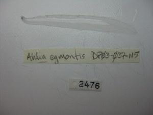 ( - DPND 2476)  @11 [ ] Copyright (2040) Ron Eytan Texas A&M University at Galveston