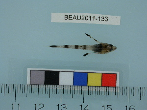 ( - BEAU2011-133a)  @13 [ ] Copyright (2012) C. W. Mecklenburg Point Stephens Research