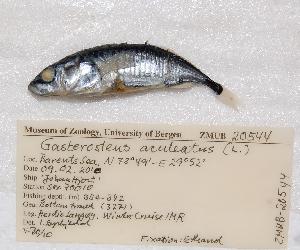 ( - ZMUB20544)  @13 [ ] Copyright (2012) University Museum of Bergen University of Bergen