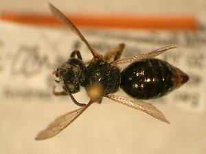 ( - JBWM0306560)  @13 [ ] Copyright (2008) Unspecified J.B. Wallis Museum of Entomology, University of Manitoba