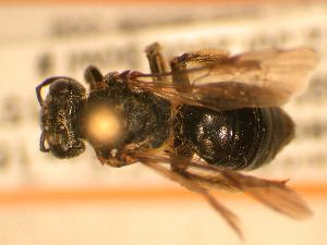 ( - JBWM0310026)  @12 [ ] Copyright (2008) Unspecified J.B. Wallis Museum of Entomology, University of Manitoba