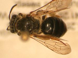( - JBWM0310028)  @13 [ ] Copyright (2008) Unspecified J.B. Wallis Museum of Entomology, University of Manitoba