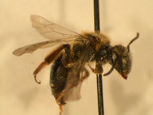 ( - JBWM0310034)  @14 [ ] Copyright (2008) Unspecified J.B. Wallis Museum of Entomology, University of Manitoba