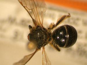 ( - JBWM0311870)  @11 [ ] Copyright (2008) Unspecified J.B. Wallis Museum of Entomology, University of Manitoba
