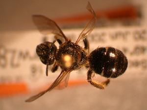 ( - JBWM0311926)  @14 [ ] Copyright (2008) J.B. Wallis Museum of Entomology, University of Manitoba J.B. Wallis Museum of Entomology, University of Manitoba
