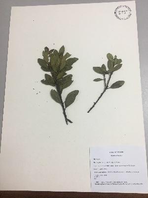 (Myricaceae - RLJ-11241)  @11 [ ] copyright (2017) Unspecified Columbus State University