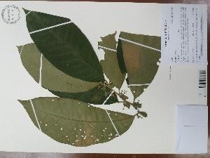 (Solanum sp - AP-9230)  @11 [ ] copyright (2119) Unspecified Columbus State University