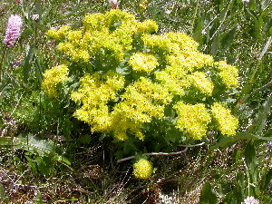 ( - CCDB-24817-B12)  @11 [ ] CreativeCommons - Attribution Non-Commercial Share-Alike (2015) Evgeny Zibzeev Central Ciberian Botanical Garden