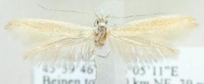 (Coleophora ceratoidis - MM21740)  @12 [ ] CreativeCommons - Attribution Non-Commercial (2012) Marko Mutanen University of Oulu