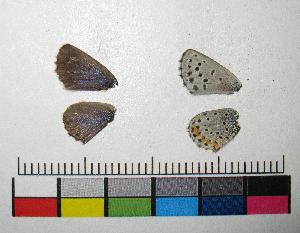 ( - RVcoll.12-M254)  @11 [ ] Copyright (2015) Vlad Dinca Institut de Biologia Evolutiva (CSIC-UPF)