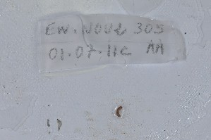 (Wegeneriona - EW-NOU2-305)  @12 [ ] Copyright (2011) Thibaud Decaens Laboratoire ECODIV, Univ Rouen