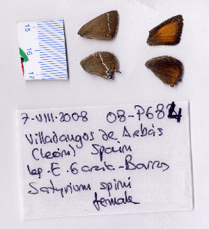 ( - RVcoll.08-P684)  @13 [ ] Copyright (2010) Butterfly Study Group at IBE Institute of Evolutionary Biology