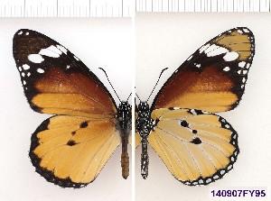 ( - SMcoll.140907FY95)  @12 [ ] Copyright (2013) Roger Vila Institute of Evolutionary Biology