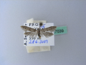 ( - BC ZSM Lep 27039)  @13 [ ] Copyright (2010) Unspecified Bavarian State Collection of Zoology (ZSM)