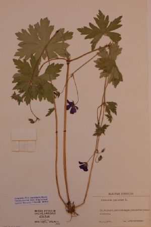 (Geranium - H400246)  @11 [ ] Unspecified (default): All Rights Reserved  Unspecified Unspecified